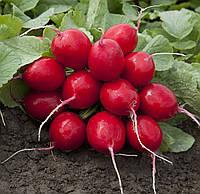 Редис Империал F1 250 г.  HVS (Heritage vegetable seeds)