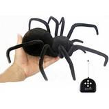 Радиоуправляемый паук Черная вдова Black Widow 779 на пульте управления, фото 2