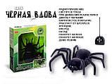 Радиоуправляемый паук Черная вдова Black Widow 779 на пульте управления, фото 8
