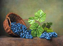 Вышивка бисером, Канва натюрморт цветы Виноградная лоза