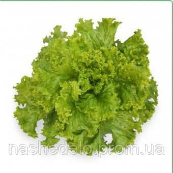 Семена салата KS 129  5гр. Kitano Seeds