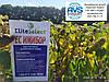 ЕС Имибор Элита Селекет под ЕвроЛайтинг. Семена подсолнечника ЕС Имибор 40ц/га, олия 51%, заразиха А-Е. Урожай 2020 года.