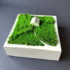 Кашпо домик из гипса cо стабилизированным мхом, размер 9х9 см