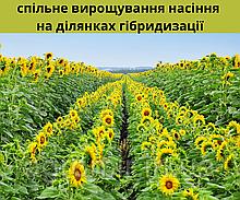 Совместные участки размножения семян