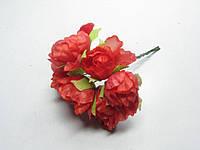 Цветок Пион красный