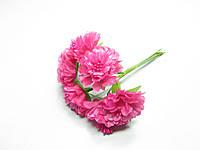 Цветок Хризантема малиновая
