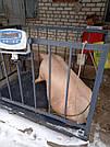 Весы для взвешивания животных VTP-G-1015 (300 кг, 1000х1500 мм) с оградкой 900 мм, фото 3