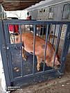 Весы для взвешивания животных VTP-G-1015 (300 кг, 1000х1500 мм) с оградкой 900 мм, фото 10