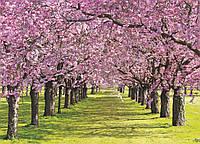 Фотообои цветы вишни 254х184 см Туннель из веток (010P4)