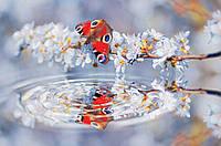 Фотообои 3D цветы 254x184 см Бабочка и волны (013P4)