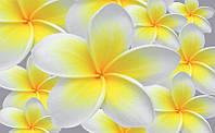 Фотообои 3D цветы 368х254 см Желтая плюмерия (033P8)