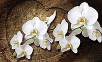 Фотообои 3D цветы 368х254 см Белая орхидея на деревянном сердце (1014P8)