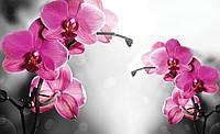 Фотообои 3D цветы 368х254 см Две розовые орхидеи(10155P8)