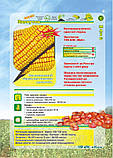 Семена кукурузы ЗДОБУТОК (ФАО 290), 2018 г.у. (Маис Черкассы), фото 2