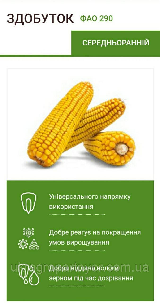 Семена кукурузы ЗДОБУТОК (ФАО 290), 2018 г.у. (Маис Черкассы)
