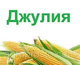 Семена Кукурузы ДН ДЖУЛИЯ ф2 ФАО 340 2019 р.у.(22,6кг) Рост Агро, фото 3