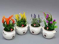 Цветы в вазонах  SU268