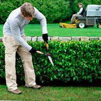 Догляд за садом і рослинами