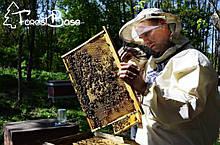 Мед та медова продукція