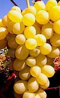 Кишмиш Володар - саджанці винограду раннього. Грона великі, товарна ягода, солодкий і ароматний