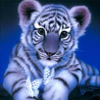 """Алмазная мозаика """"Тигрёнок с бабочками"""", 30*40см, без рамки, в кор. 39*8*5см"""