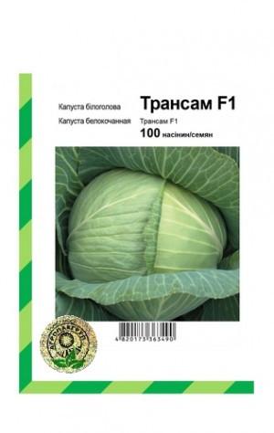 Семена капусты Трансам F1,100 семян — поздняя (128 дней), для хранения, до 6 месяцев, Bejo