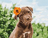 Картина по номерам Собачка милый романтик, размер 50*40 см, зарисовка полная, на подрамнике, фото 1