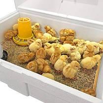 Брудер Теплуша ( Ясла ) для курчат, бройлерів, перепілок місткість до 100 голів, фото 3