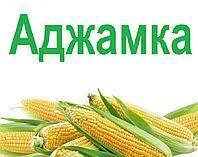 Кукуруза ДН АДЖАМКА ФАО 320 2019 р.у. Рост Агро