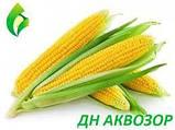Семена Кукурузы ДН АКВАЗОР (ФАО 320) 2019г.у (24,2кг), фото 3