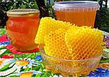 Мед разнотравье + подсолнечниковый урожая 2020 года, фото 6