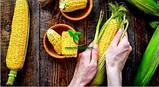 Насіння Кукурудзи ТЕСЛА (ФАО 350), ВНІС, фото 9