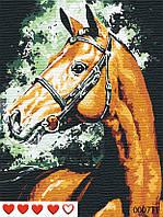 Картина по номерам Конь, цветной холст, 40*50 см, без коробки Barvi