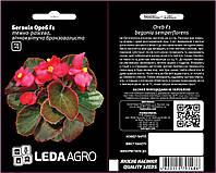 Ореб F1, темно-рожева бронзоволиста бегонія 10 шт (ЛАН) НОВИНКА
