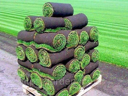 Газон рулонный Киев. Продажа рулонного газона начнется после 25 апреля 2016 года!!!!!!