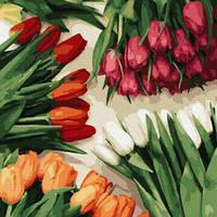 Картины по номерам Разноцветные тюльпаны