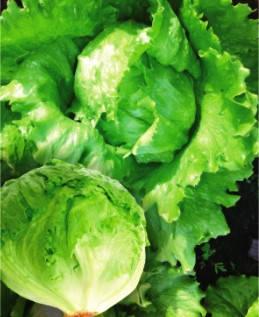 Семена салата Айсберг, фото 2