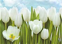 Фото обои Белые тюльпаны размер 134 х 194 см