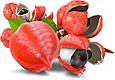 Жидкий Каштан в пакете Merida (мелена) - натуральное средство для похудения и здоровья (упаковка 100гр), фото 4