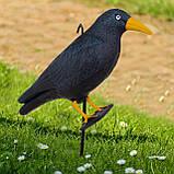 Ворон для відлякування птахів Springos SKL41-277658, фото 6