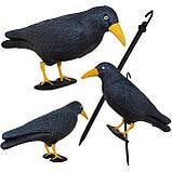 Ворон для отпугивания птиц Springos SKL41-277658, фото 7