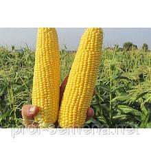 """ГСС GSS 5649 F1 SG, 500 г. """"Проф.насіння"""""""