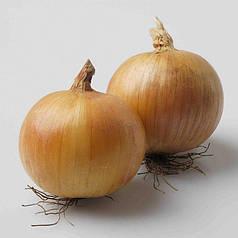 Семена лук озимый Вольф F1 1 гр Hazera 6067