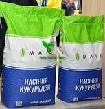 Насіння Кукурудзи КОДИВАЛ (Кодисем) ФАО 290, 2020 р. в. (Маїс Черкаси), фото 6