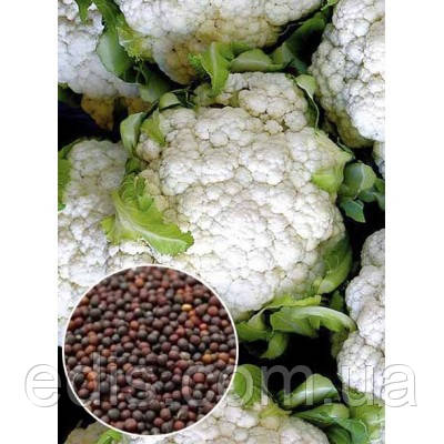 Капуста цветная Снежный шар 50 г, семена Яскрава, фото 2