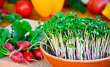 Набір для вирощування мікрозелені середній (10 врожаїв), фото 3