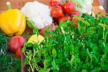Набір для вирощування мікрозелені середній (10 врожаїв), фото 2