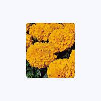 Семена цветов Бархатцы Америк. Кабери Orange 100 семян