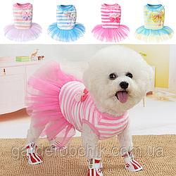 """Платье велюровое, свитер, толстовка  для собаки, кошки  """"КОНФЕТКИ"""". Одежда для собак, кошек"""