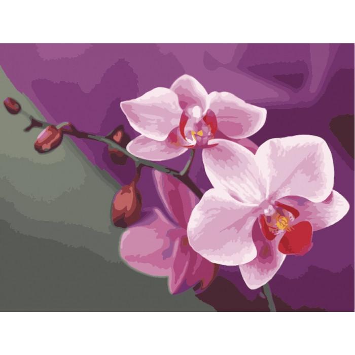 Картина по номерам 40*50 см. Идейка (без коробки) Розовые орхидеи (КНО 1081)
